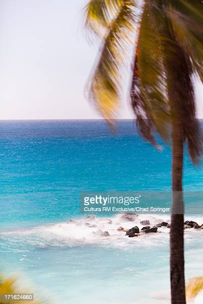 Palm tree and turquoise sea