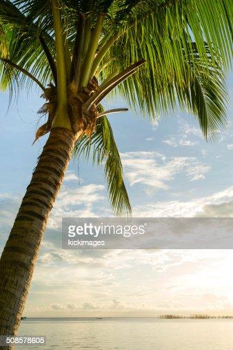Palm Tree at Beach : Stock Photo
