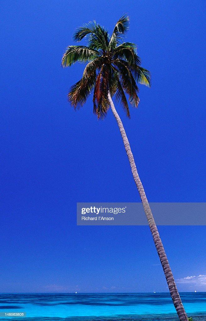 Palm tree at Darkwood Beach.