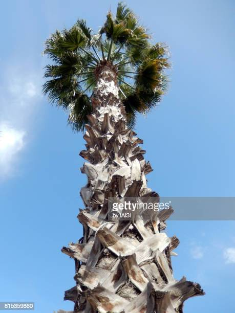 Palm tree at low angle view against sky
