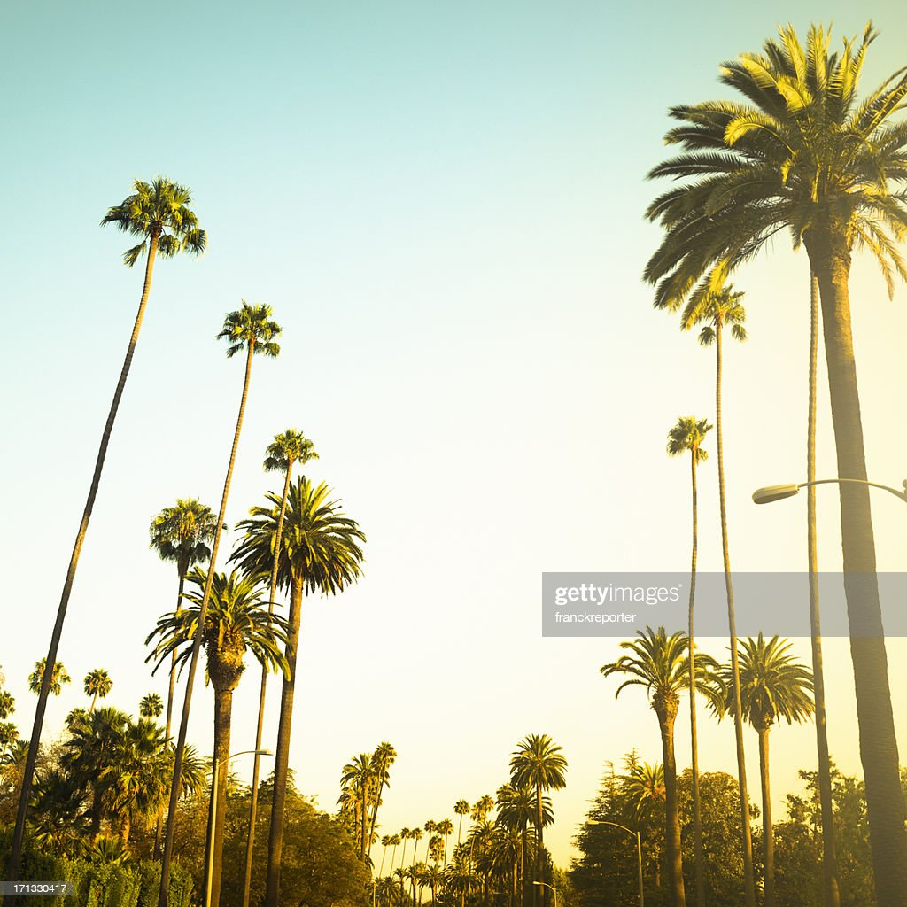 palm tree at sunset on beverly hills california usa stock photo