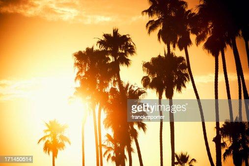 夕暮れのヤシの木でカリフォルニア-米国