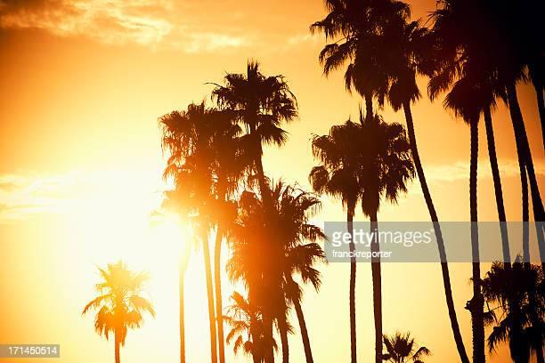Palme bei Sonnenuntergang auf den California – USA