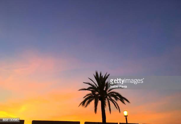 Palm Tree At Sunset, Peniscola, Spain