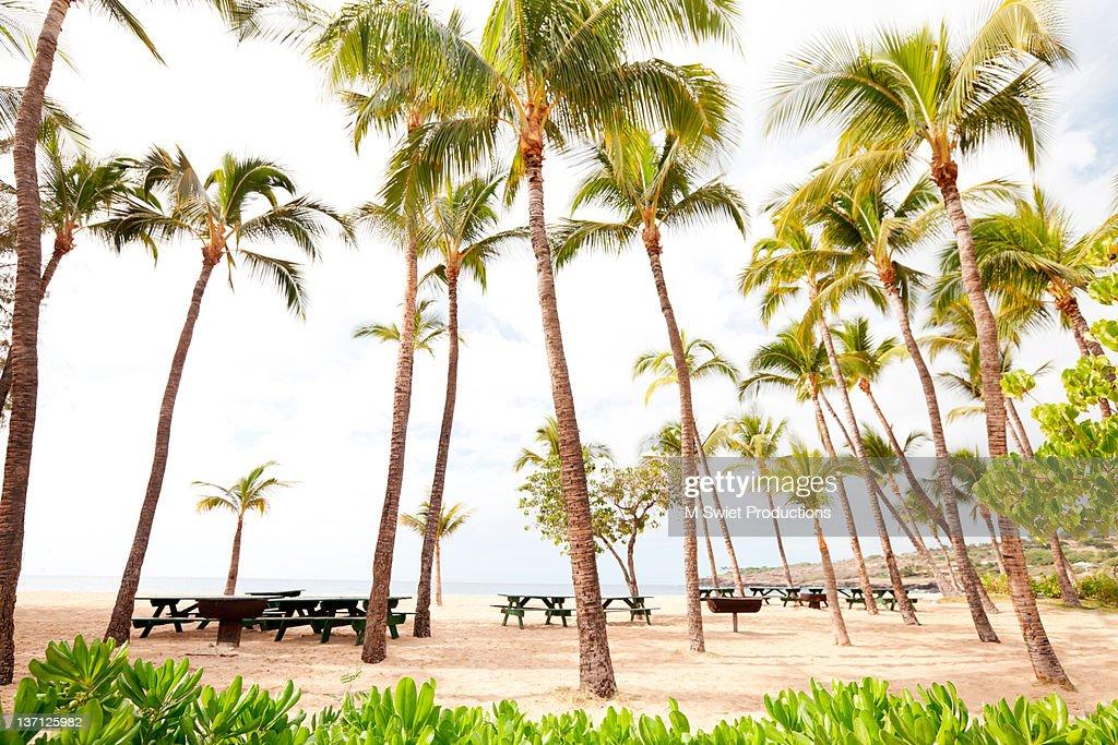 Palm tree beach : Stock Photo