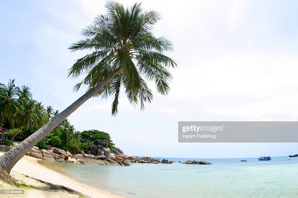 A Palm Tree Bends Over on a Perfect Beach in Koh Tao, tranquil, tranquility, tropical, paradise, pristine, tropical, heaven, delight, joy, haven, retreat, sanctuary, oasis, Thailand.