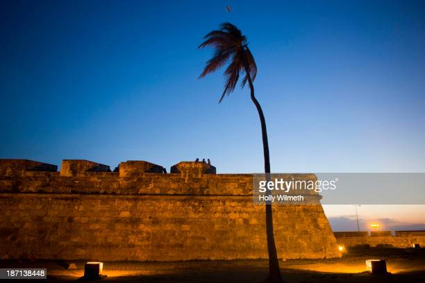 Palm tree blowing in wind outside city walls, Cartagena, Colombia