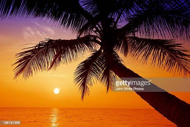 Palm tree. Cairns. Queensland. Australia.