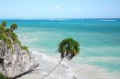 Palm tree, cliffs, over Caribbean Sea