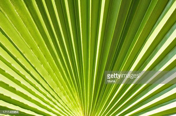 green leaf diseño, creativo patrón abstracto fondo de fotos