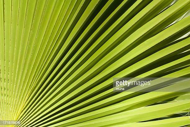 Motif de feuilles vertes, abstrait design créatif arrière-plan photo