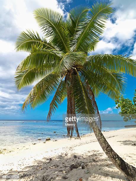 Palmiers sur la plage de vos rêves
