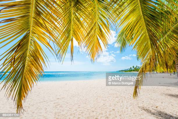 Palm tree fronds on a tropical beach of the Caribbean sea.