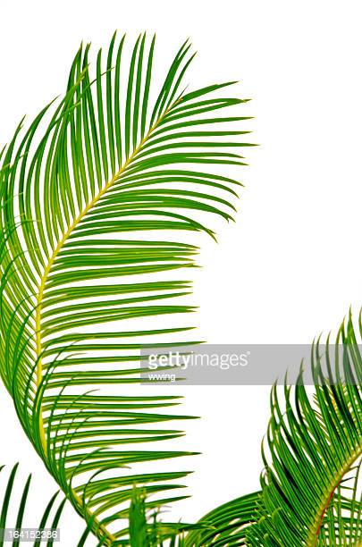 Palm Tree Palmwedeln