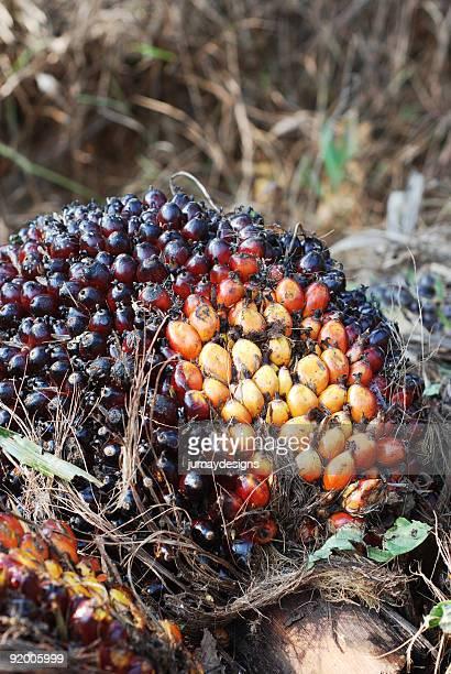 Palm Tree frutas