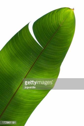 Palm Tree Green Leaf