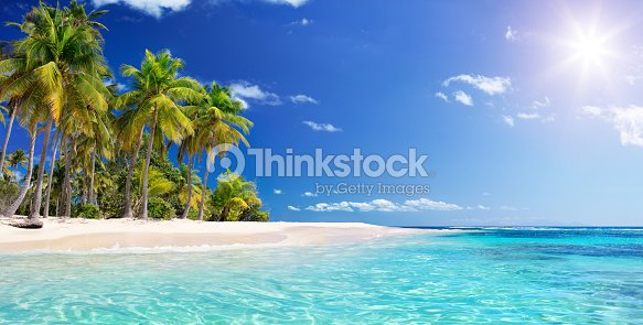 Palm tree In Beach In Tropical Island -  Caribbean - Guadalupe : Stock Photo