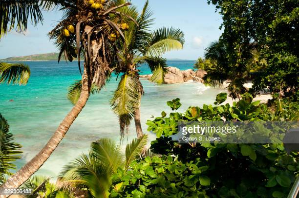 Palm tree in exotic beach