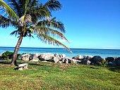 Palm trees on Grand Bahama Island.