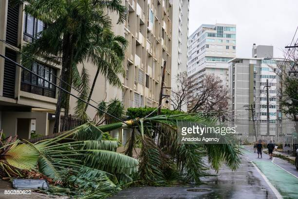 A palm tree is balanced on fallen power lines after Hurricane Maria at Condado in San Juan Puerto Rico on September 20 2017