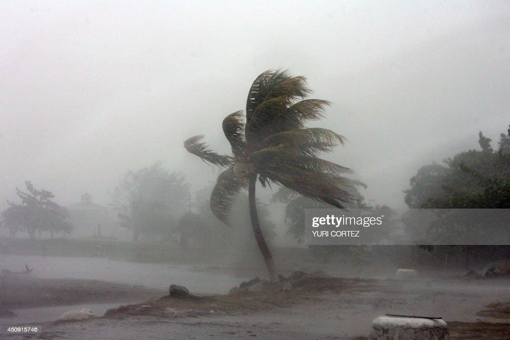 Hasil gambar untuk tree that hit by rain