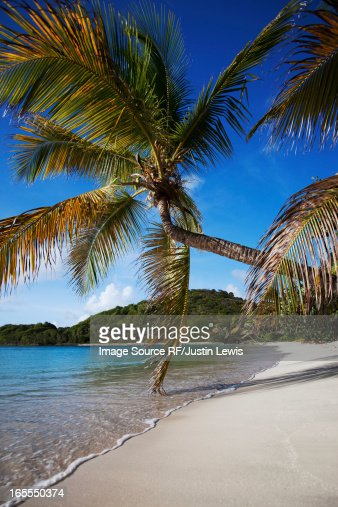 Palm tree leaning over tropical beach : Stock Photo