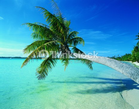 palm tree leaning over water stock photo thinkstock