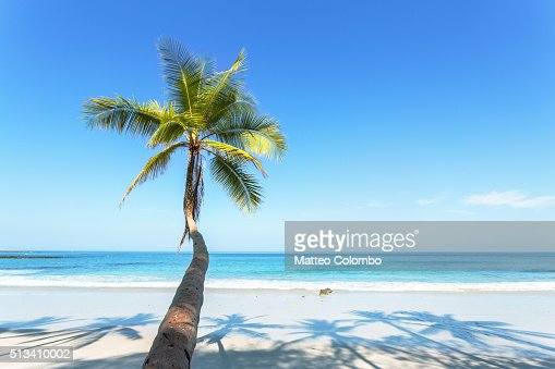 Palm tree leaning toward tropical beach with blue sky, Costa Rica : Stock-Foto