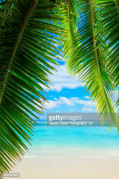 Palm tree leaves and tropical beach