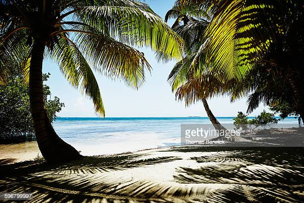 Palm tree lined beach in the Caribbean Sea
