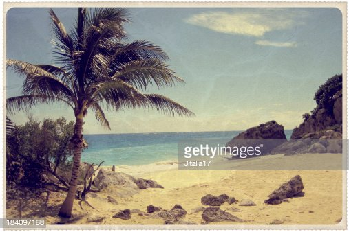 Palm Tree on a Mexican Beach - Vintage Postcard