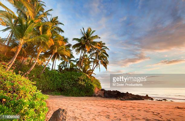 Palm tree on beach at sunset