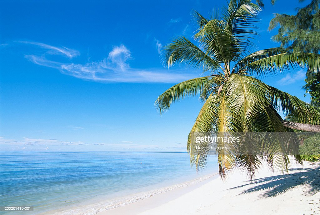 Palm tree on beach : Stock Photo