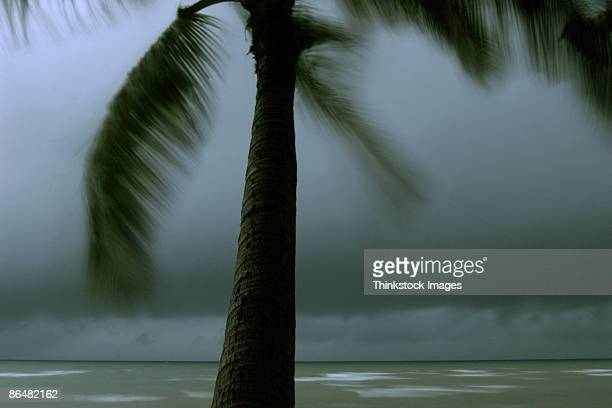 Palm tree on coast during storm