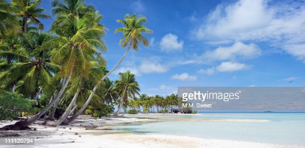 Palm tree on paradise beach