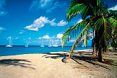 Palm tree on Pinneys Beach with sailboats in the distance on Nevis, Caribbean