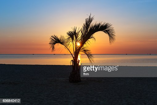 Palm tree on the beach in an amazing sunrise