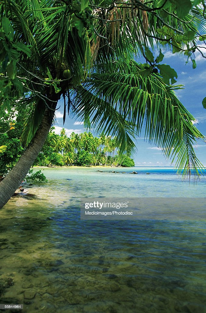 Palm tree on the beach, Tahiti Beachcomber Parkroyal Hotel, Tahiti, French Polynesia : Stock Photo