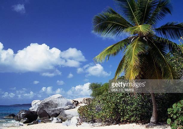 Palm tree on the beach Virgin Gorda Island British Virgin Islands British Overseas Territory United Kingdom