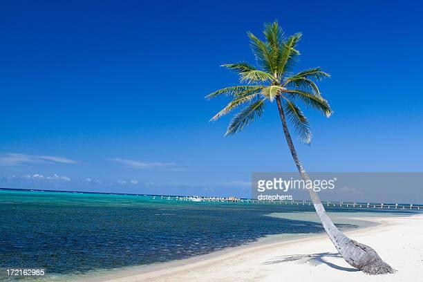 Palmera en la playa de arena blanca