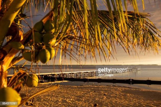 Palm tree over dock and beach