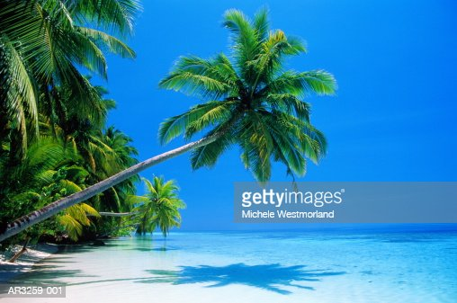Palm tree overhang on tropical beach, Maldives : Stock Photo