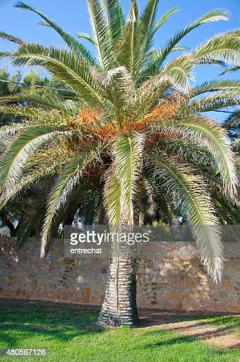 Palm tree. : Stock Photo