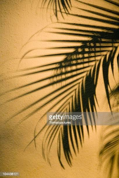Palm Baum Schatten