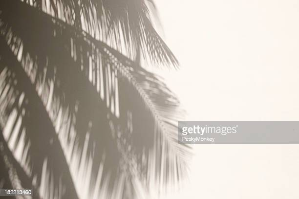 Palm Tree Shadows on White Wall