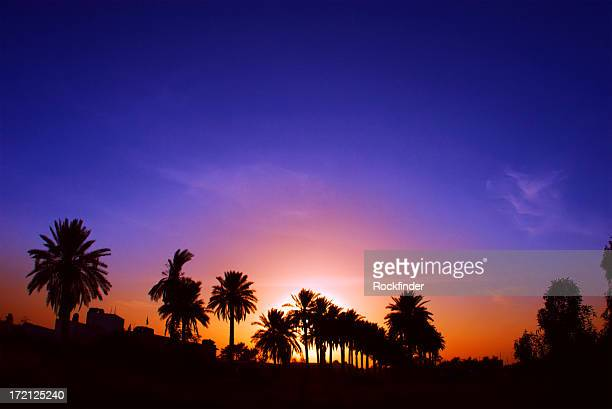 Palm tree silhouettes under a multicolored Iraqi sunset
