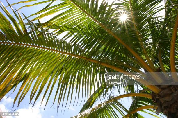 Palm Tree Summer Time