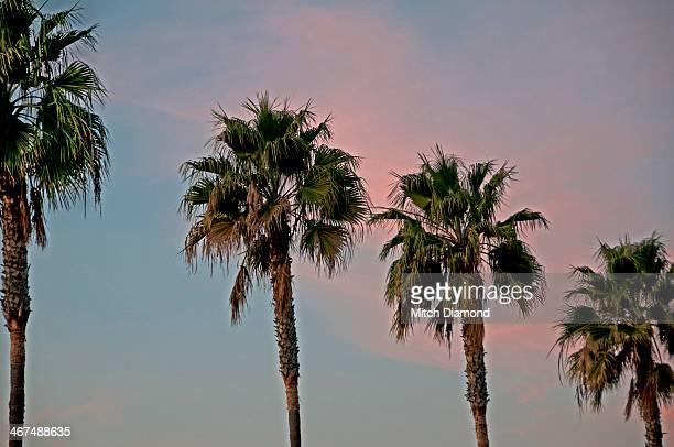 Palm tree sunset sky