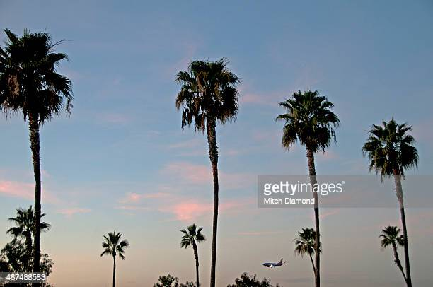 Palm tree sunset sky with airplane