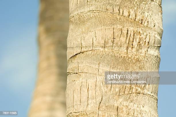 Palm tree trunks, close-up